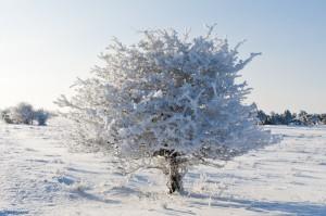 December Ottenby